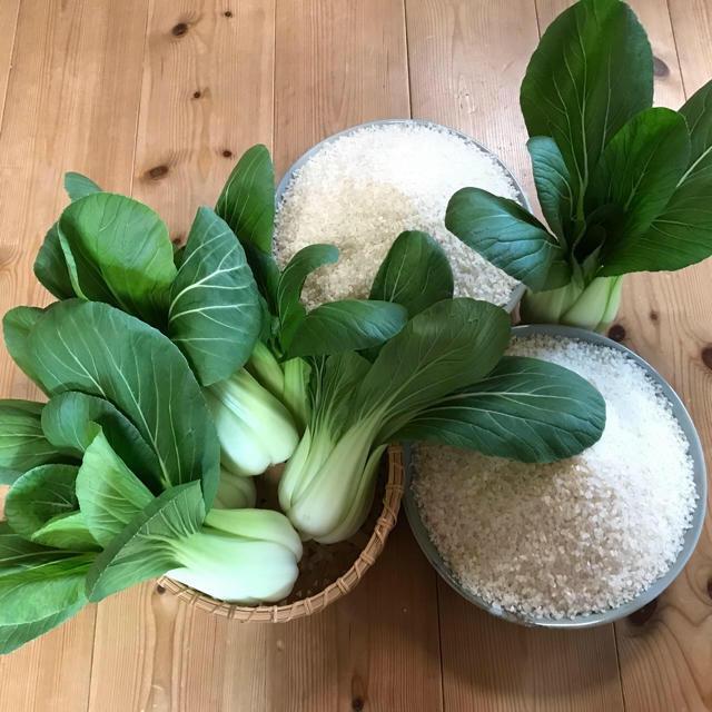 コシヒカリ、キュウリ、チンゲン菜 食品/飲料/酒の食品(野菜)の商品写真