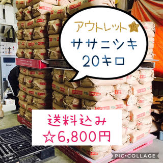 たかてるだい様専用☆古米!宮城県産ササニシキ20キロ(米/穀物)