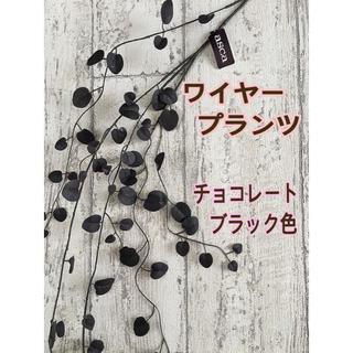 109☆ワイヤープランツ チョコブラック(ドライフラワー)