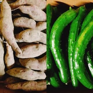 《こころ様専用》訳ありキュウリ5kg+紫さつま芋4.5kgset(野菜)