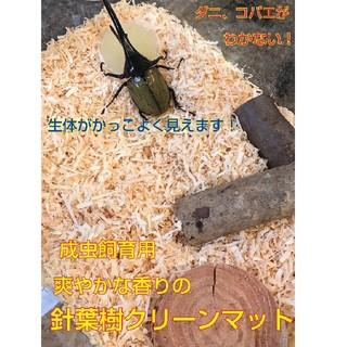 成虫管理はこれ!爽やかな香りの針葉樹クリーンマット⭐️ ダニやコバエがわかない!(虫類)