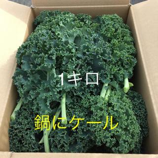 【常温便】九州産 有機サラダケール 1キロ(野菜)