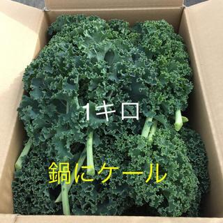 【チルド便】九州産 有機サラダケール 1キロ(野菜)