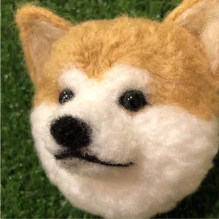 秋田犬ぽんぽん(犬)