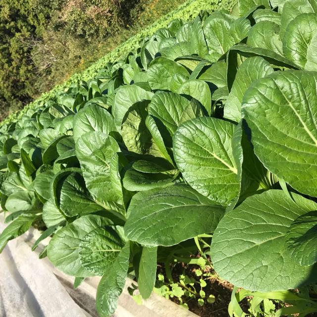 成田産 お野菜詰め合わせ5品80サイズ(栽培期間中無農薬、無化学肥料) 食品/飲料/酒の食品(野菜)の商品写真