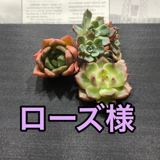 ローズ様専用♡多肉植物(その他)