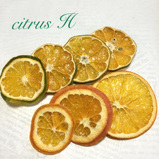 citrus H ドライフルーツ(ドライフラワー)