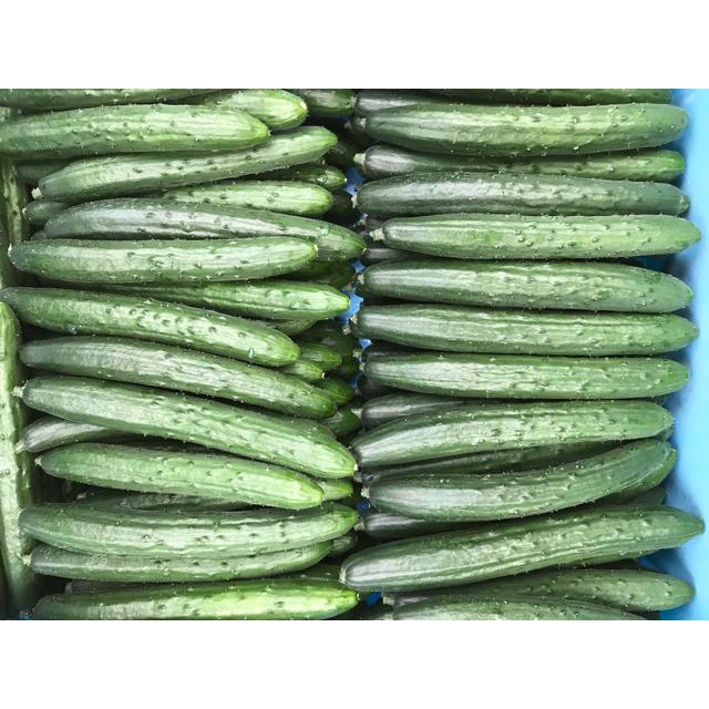本プラスセット。コシヒカリ、キュウリ、チンゲン菜 食品/飲料/酒の食品(野菜)の商品写真