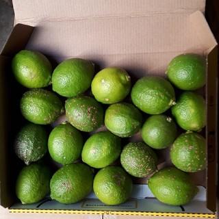 国産無農薬 グリーンレモン 1.1kg 小粒 送料無料(フルーツ)