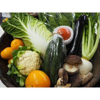 ③【期間限定値下】2800円→2500円 白菜&葉物セット100サイズ 送料込(野菜)