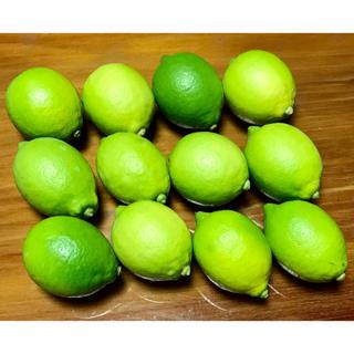瀬戸田 レモン 国産グリーンレモン(フルーツ)