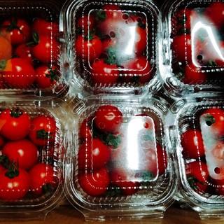 《S様専用》フルーツトマト(野菜)