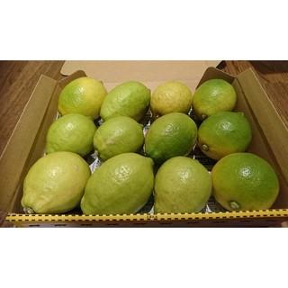 mama凛papa凛様専用 広島県産 無農薬グリーンレモン 1.5キロ以上(フルーツ)