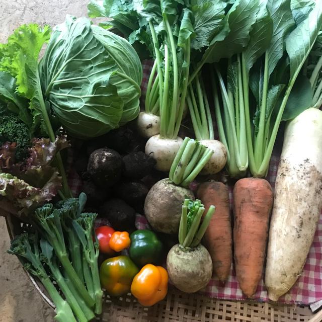 成田産 お野菜詰め合わせ10品100サイズ(栽培期間中無農薬、無化学肥料) 食品/飲料/酒の食品(野菜)の商品写真