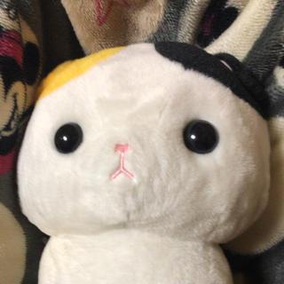 ぬこ 【 タマ 】(ぬいぐるみ/人形)