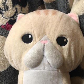 ぬこ 【 こてつ 】(ぬいぐるみ/人形)