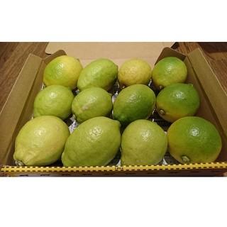 広島県大崎下島産 無農薬グリーンレモン 1.5キロ以上(フルーツ)