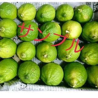 グリーンレモン 国産レモン (フルーツ)