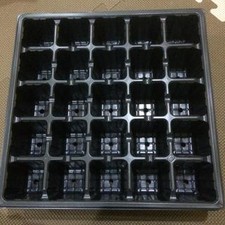 セルボックス  5×5  3枚 多肉 育苗(プランター)