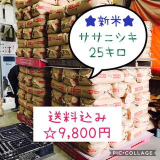 新米☆大粒☆特A取得☆宮城県産ササニシキ25キロ(米/穀物)