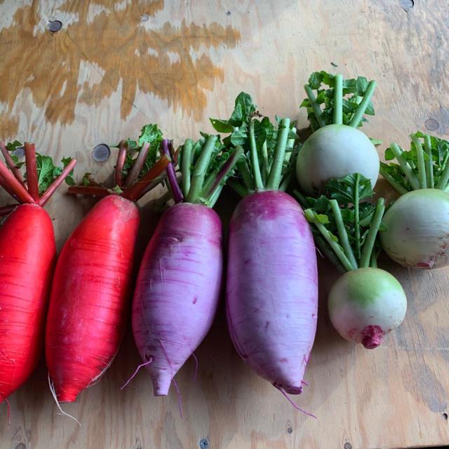 彩新鮮大根 セット 食品/飲料/酒の食品(野菜)の商品写真