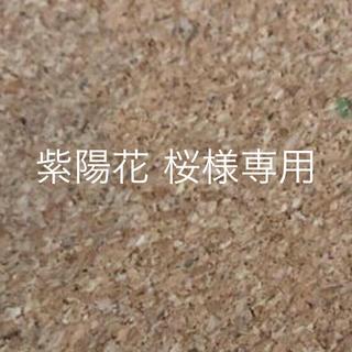 紫陽花 桜 様専用(ドライフラワー)