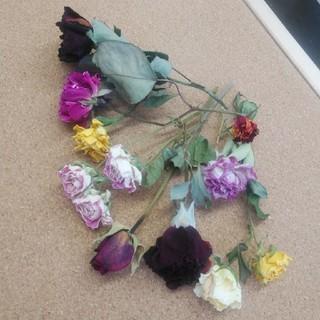 花材62 ドライフラワー 色とりどりのバラ10本 ハーバリウムやアロマワックスに(ドライフラワー)