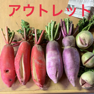 大根 アウトレット(野菜)