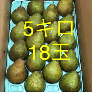 食べ頃‼️洋梨  シルバーベル   5キロ    18玉  (フルーツ)