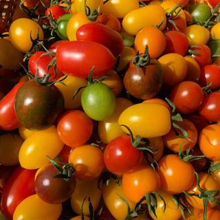 カラーミニトマトミックス(野菜)