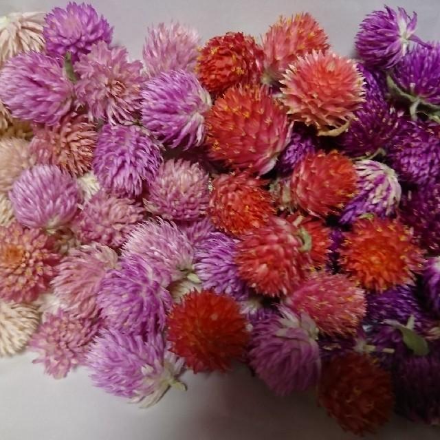 再々販♥️︎ドライフラワー♡千日紅 100個+α 詰め合わせ 花材 ハンドメイド ハンドメイドのフラワー/ガーデン(ドライフラワー)の商品写真
