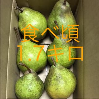 洋梨 シルバーベル  食べ頃‼️ 1.7キロ(フルーツ)