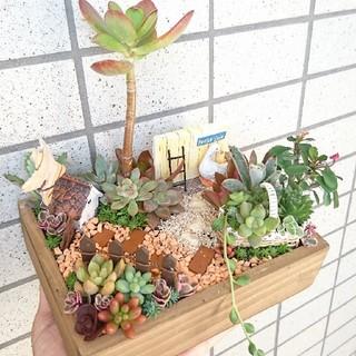 多肉寄せ植え  箱庭(その他)