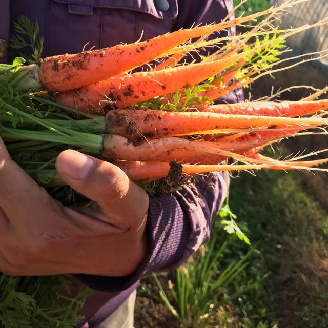 【栽培期間中農薬不使用】渥美半島から直送!旬彩野菜バスケット 食品/飲料/酒の食品(野菜)の商品写真