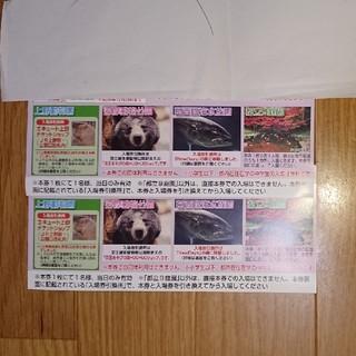 [上野動物園、葛西臨海水族園、多摩動物公園共通入場引換券2枚組](動物園)