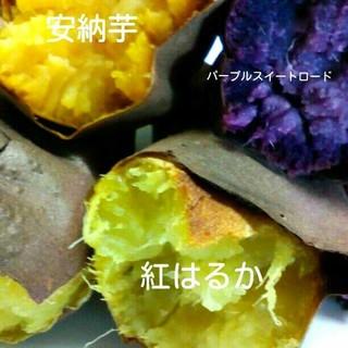 皮まで安心安全☆お子様のおやつや離乳食にも☆自然農法のさつまいも3品種食べ比べ(野菜)