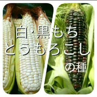 専用ページ 白・黒もちとうもろこしの種(30 粒、半分ずつ)(野菜)