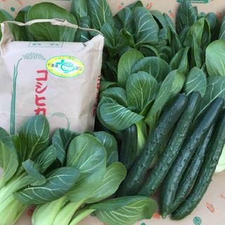 コシヒカリ、キュウリ、チンゲン菜(野菜)