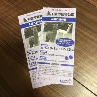 千葉市動物公園 入場ペア券(動物園)