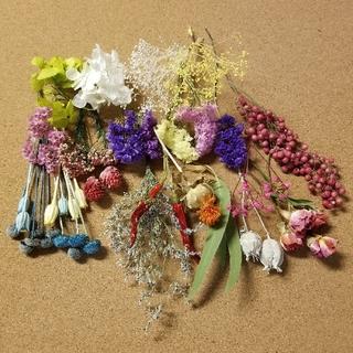 ドライフラワー プリザーブドフラワー セット ④ 短め茎付 花材 いろいろ(ドライフラワー)