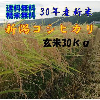 新米✨農家直送!コシヒカリ玄米30kg(米/穀物)