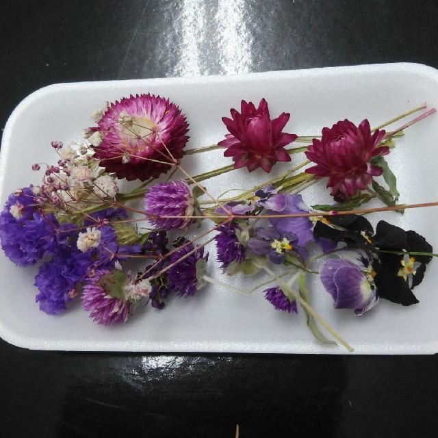 花材63 ドライフラワー パープルセット アロマワックス レジン ハーバリウムに ハンドメイドのフラワー/ガーデン(ドライフラワー)の商品写真