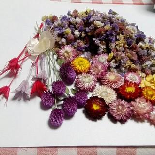 花材整理 ドライフラワー花材2(ドライフラワー)