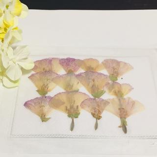 ドライフラワー ブリザードフラワー 紫×ベージュ(各種パーツ)