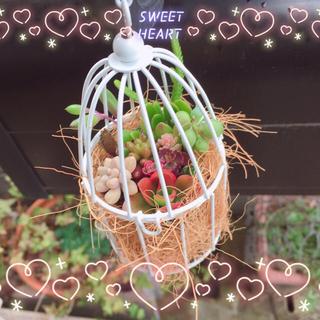 ヤーコ様専用です☆多肉植物 寄せ植え☆白い鳥かご☆ミニピッチャー黒☆2点☆(その他)