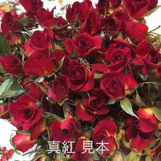 ミニバラ mix ドライフラワー★シリカゲル乾燥20輪セット★おまけ付き★薔薇(各種パーツ)