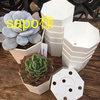sapo様専用★八角プラ鉢(その他)