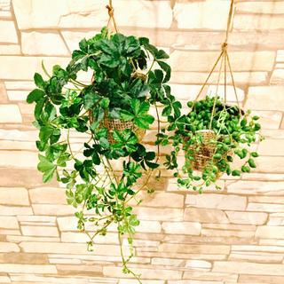 4 再販lovelyセット♡シュガーバイン&グリーンネックレス♡可愛い壁掛けに(プランター)