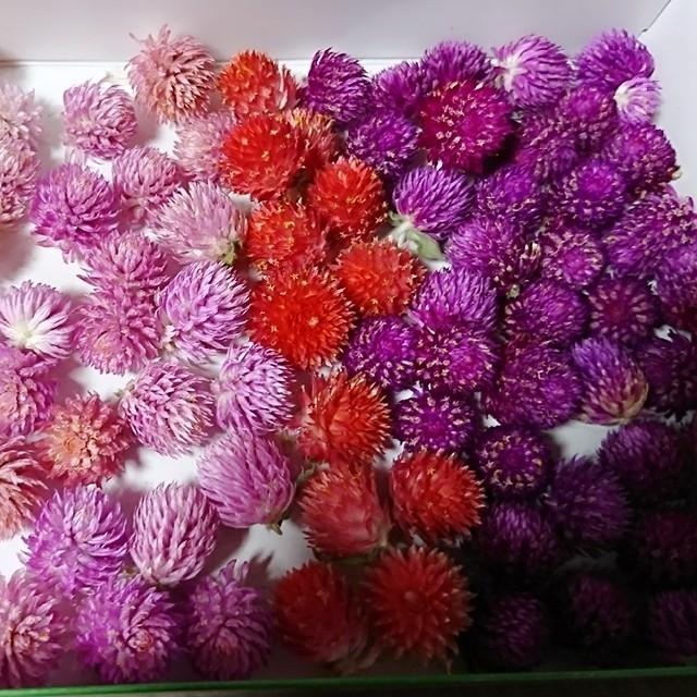 ゆいゆい様♡ドライフラワー♡千日紅 100個+α 詰め合わせ 花材 ハンドメイド ハンドメイドのフラワー/ガーデン(ドライフラワー)の商品写真