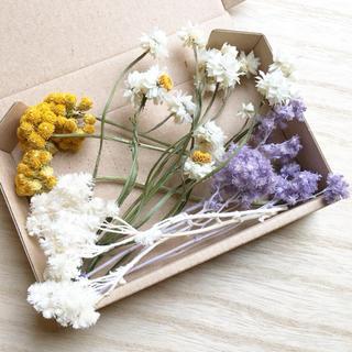 花材セット ドライフラワー ナチュラル  ハーバリウム、アロマワックスに♪(ドライフラワー)